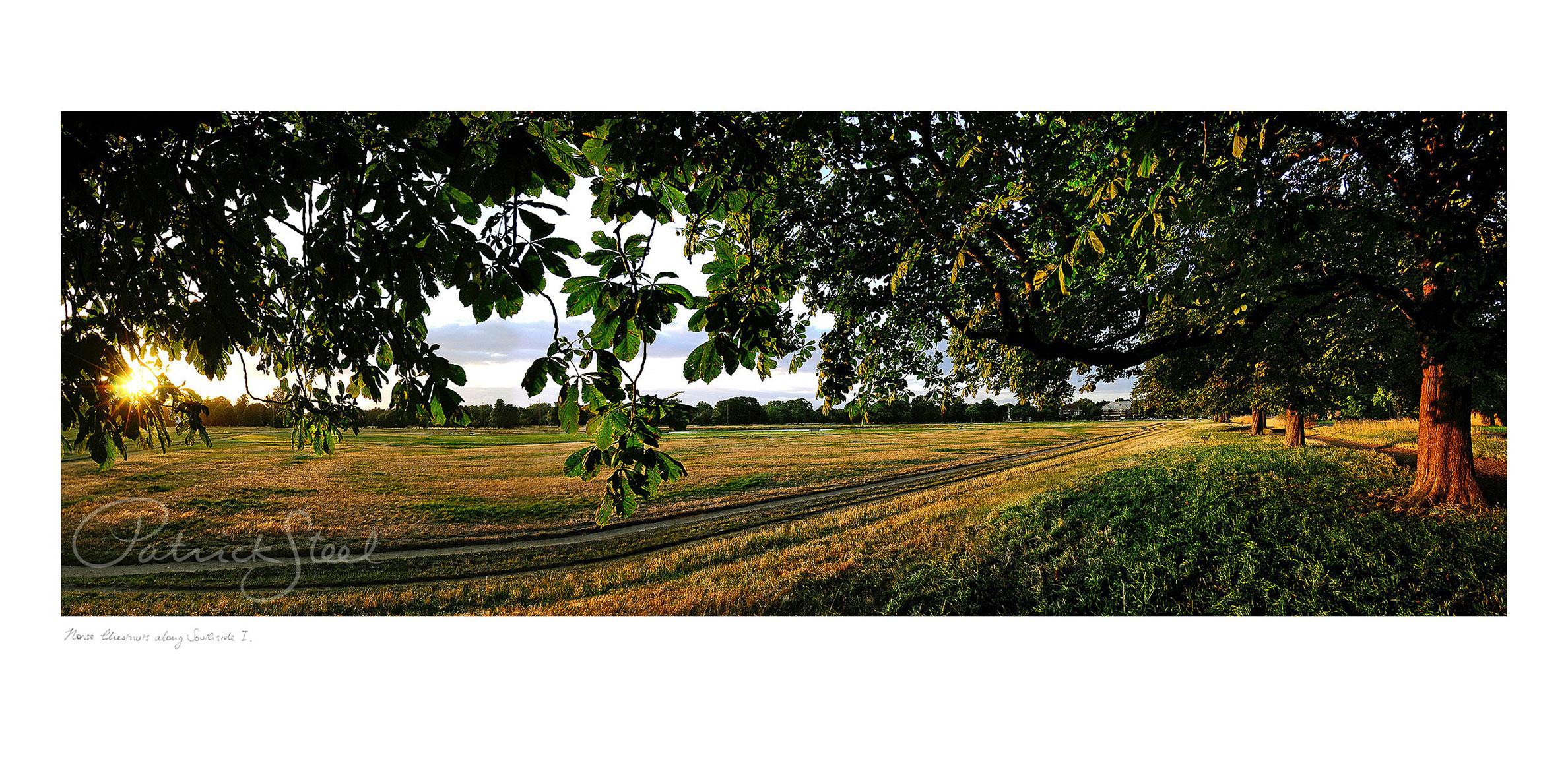 Title: Horse Chestnut Trees along Southside I, Wimbledon Common   <a href=