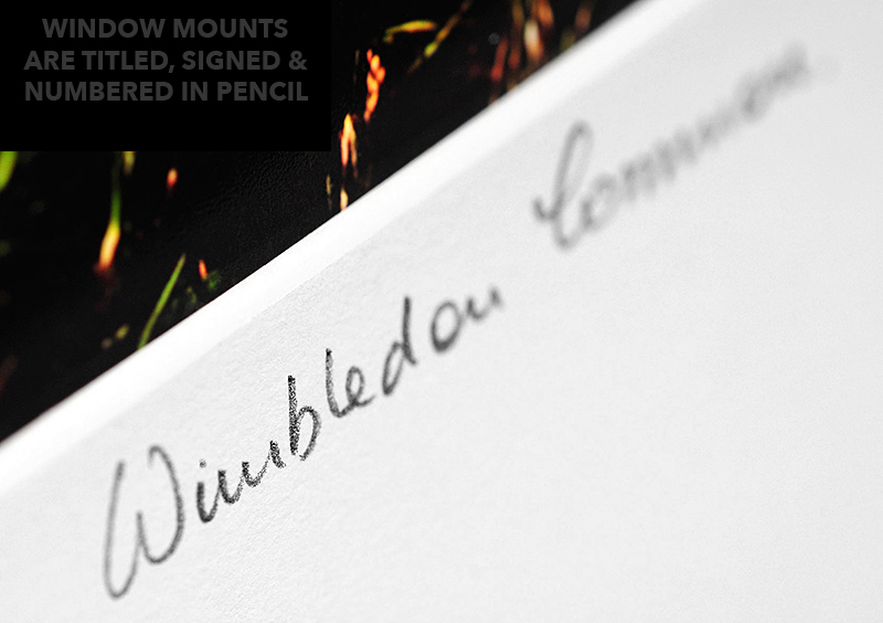 wimbledon common title sample