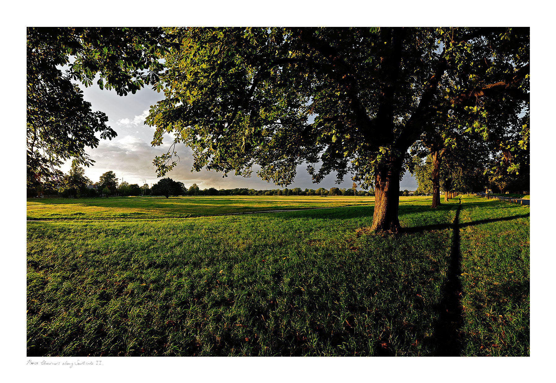 Title: Horse Chestnut Trees along Southside II, Wimbledon Common   <a href=