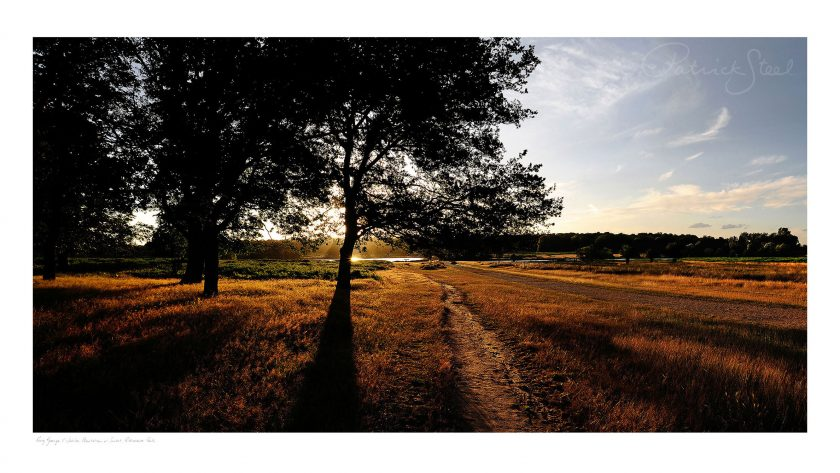 Landscape Photograph of Richmond Park : King George V Jubilee Plantation at Sunset