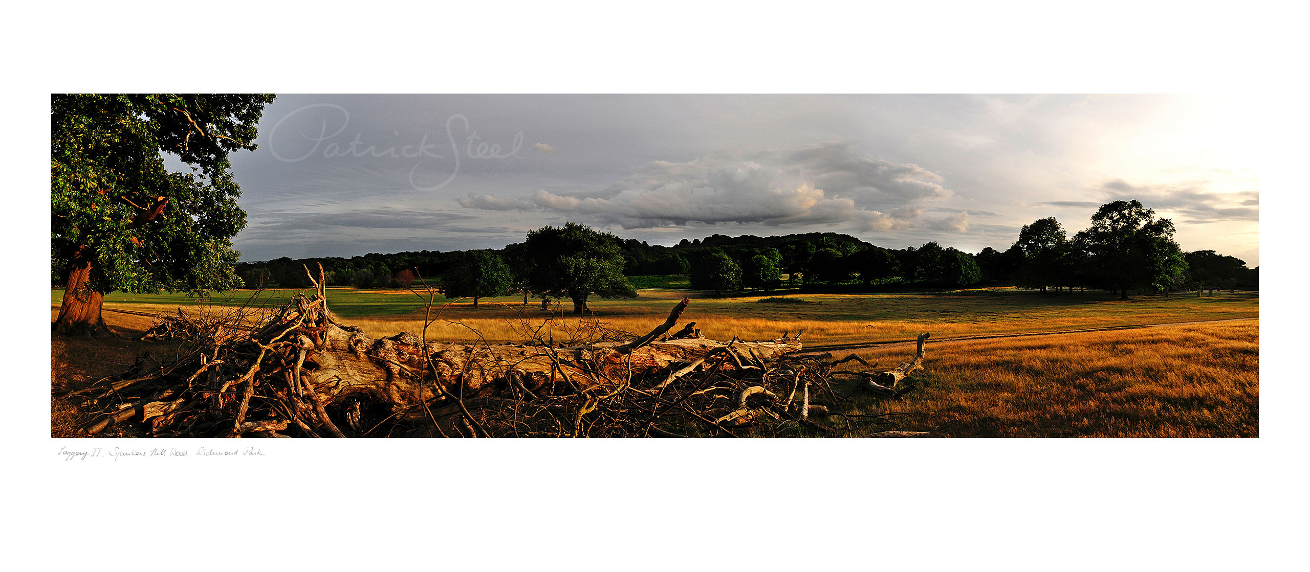 Landscape Photograph of Richmond Park : Loggery II, Spankers Hill Wood