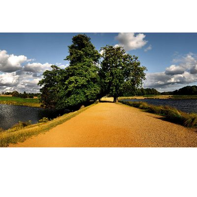 landscape photograph taken in richmond park by patrick steel